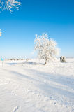 Beautiful winter landscape with snow covered trees - sunny winter day Royalty Free Stock Photo