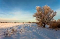 Beautiful winter landscape with snow covered trees Royalty Free Stock Image
