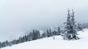 Beautiful winter landscape with snow covered trees. Winter mountains. Spruce Tree Forest Covered by Snow in Winter Landscape stock footage
