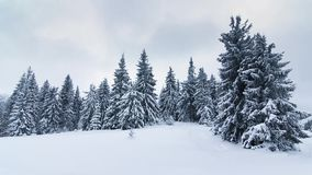 Beautiful winter landscape with snow covered trees. Winter mountains. Spruce Tree Forest Covered by Snow in Winter Landscape stock video footage