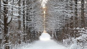 Beautiful winter landscape snow-covered walkway in the woods. Beautiful winter landscape snow-covered walkway in the woods stock video