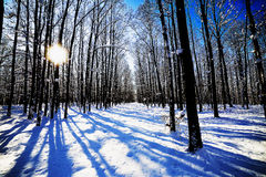 Beautiful winter landscape with snow covering the trees Royalty Free Stock Photography