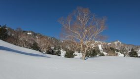 Beautiful winter landscape with snow in a sunshine day.  stock footage