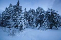 Beautiful winter landscape snow tree Stock Image