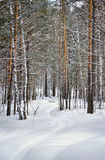 Beautiful winter landscape with snowy lane in a forest Stock Photography
