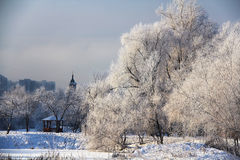 A beautiful winter landscape. Beautiful snowy tree on the shore of the Bay Royalty Free Stock Images