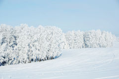 Beautiful winter landscape with snowy trees Royalty Free Stock Image