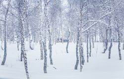 A beautiful winter landscape with snowy trees and mountains in a distance. In central Norway Royalty Free Stock Photography