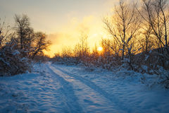 Beautiful winter landscape with sunrise sky, road and trees Stock Photography