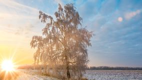 Beautiful winter landscape at sunset with fog and snow Royalty Free Stock Photography