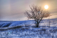Beautiful winter landscape at sunset with fog and snow Royalty Free Stock Image