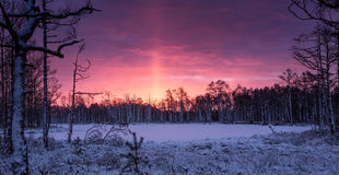 Beautiful winter landscape at swamp in Latvia. With silhouettes of trees on horizon and stunning colorful sunrise Royalty Free Stock Image