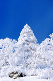 Beautiful Winter landscape, Trees covered with white snow. Beautiful Winter landscape, Trees covered with white snow and blue sky Stock Images
