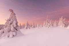 Free Beautiful Winter Landscape, Trees Covered With Snow. Royalty Free Stock Image - 136246576