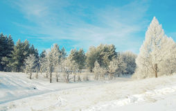 Beautiful winter landscape with trees Royalty Free Stock Photo