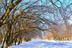 Beautiful winter landscape. Stock Photos