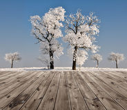 Beautiful winter landscape with trees Stock Image
