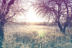Beautiful winter landscape with vintage toning Royalty Free Stock Photos