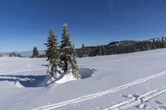Winter landscape of Vitosha Mountain, Sofia City Region, Bulgaria royalty free stock images