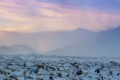 Beautiful winter landscape windy and covered snow in Iceland Royalty Free Stock Photo