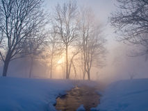 Beautiful winter morning. A rising sun in the winter park Royalty Free Stock Photography