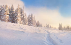 Beautiful winter morning. In the mountains Royalty Free Stock Images