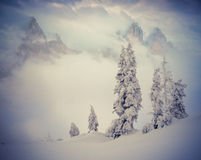 Beautiful winter morning in the foggy mountains. Stock Image