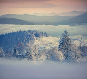 Beautiful winter morning in foggy mountains Royalty Free Stock Image