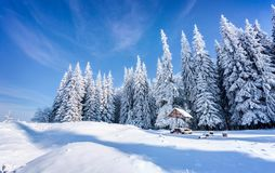 Beautiful winter morning after heavy snowfall in the mountain fo Stock Images