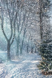 Beautiful winter morning landscape in the city park. Beautiful winter morning landscape. sunlight on snow-covered road in the park Stock Images