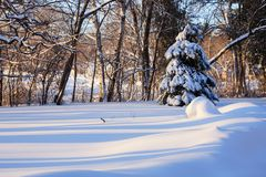 Beautiful winter morning landscape. Scenic view with a spruce and fresh snow that is striped by the shadows of trees during the sunrise Royalty Free Stock Images