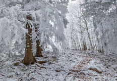 Beautiful winter morning in mountain forest. Beautiful winter morning in the mountain forest. Retro style Stock Photo