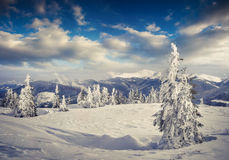 Beautiful winter morning in the mountain. Stock Photography