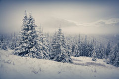 Beautiful winter morning in the mountain. Retro style Royalty Free Stock Image