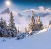 Beautiful winter morning in mountains Royalty Free Stock Images