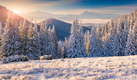 Beautiful winter morning in mountains. Beautiful winter morning in the mountains Stock Photos