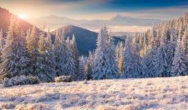 Beautiful winter morning in mountains Stock Photos