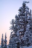 Beautiful winter morning with snow covered trees. At mountains Royalty Free Stock Image