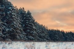 Winter morning with snow covered trees. Beautiful winter morning with snow covered trees Stock Photography