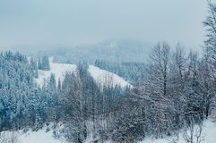 Beautiful winter mountain landscape with forest royalty free stock photo