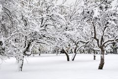 Snowy Trees in The Winter Park. Beautiful Winter mountain landscape - South Park in Sofia, Bulgaria ,tree with snow Royalty Free Stock Photography