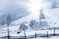 Beautiful winter mountains landscape with snowy fir forest Royalty Free Stock Image