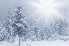 Beautiful winter mountains landscape with snowy fir forest Royalty Free Stock Photos