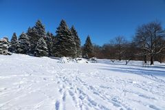 Beautiful winter nature background. Winter sunny day landscape with clear blue sky over spruces and trees in a park and footprints on a fresh snow cover on a Royalty Free Stock Photo