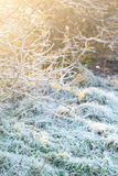 Beautiful winter nature with grass close up Stock Images