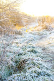 Beautiful winter nature with grass close up Stock Photo
