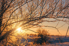 Beautiful winter nature landscape. sunset through snow tree Stock Image