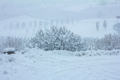 Beautiful winter nature with lots of snow. A lot of snow on the branches of trees. Snowy winter in Europe. Beautiful winter nature with lots of snow. Tree with royalty free stock images