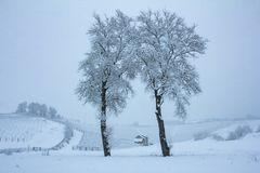 Beautiful winter nature with lots of snow. Tree with lots of snow and cold. Snowy winter i. Beautiful winter nature with lots of snow. Tree with lots of snow and stock photo