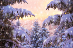 Beautiful winter nature Royalty Free Stock Photos